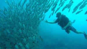 Scuba diving adventure in Costa Rica is world class