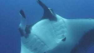 best scuba diving costa rica