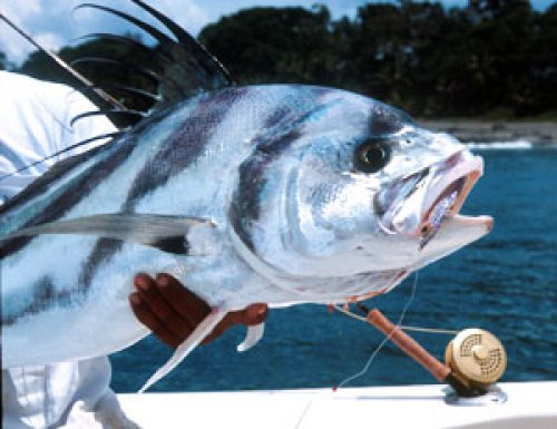 Deep sea sport fishing in north west pacific costa rica for Deep sea fishing costa rica
