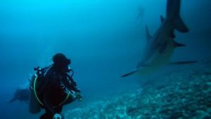 Costa Rica Scuba Diving Specials