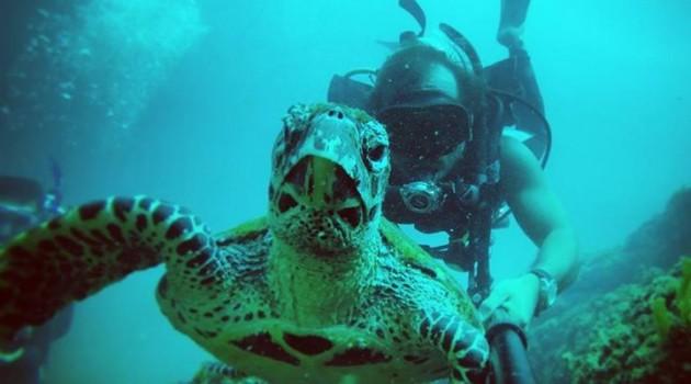 Turtle Scuba Diving Costa Rica