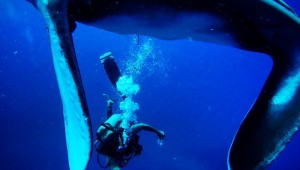 best pacific ocean scuba diving costa rica