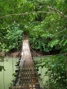 Bridges at the rainforest and Drake's Bay Costa Rica