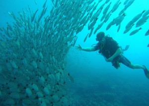 Scuba diving adventure in Costa Rica is world class
