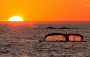 Whale Tale on Sunset Cruise in Costa Rica