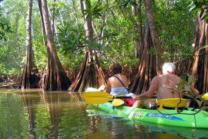 Kayaking in the estuary at Tamarindo Costa Rica