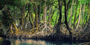 Mangrove estuarty kayak tour Tamarindo Costa Rica with Bill Beard's