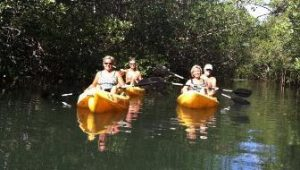 Tamarindo estuary kayak tour with Bill Beard's Costa Roca