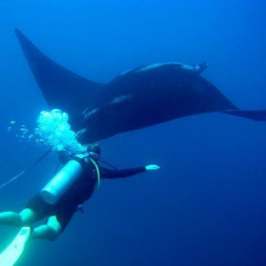 Scuba diving in Costa Rica with Bill Beard's